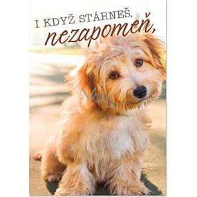 Ditipo Hracie želanie Aj keď starneš, nezabudni Petr Novák Priateľstvo na n-tú 224 x 157 mm