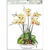 Room Decor Okenné fólie bez lepidla orchidey žlto-biela 42 x 30 cm
