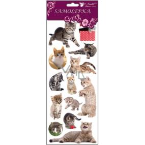 Room Decor Samolepky kočky, kočka v trávě 34,5 x 12,5 cm