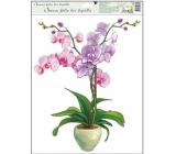Okenné fólie bez lepidla orchidey svetlo ružová 42 x 30 cm