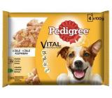 Pedigree Vital Protection s kuracím mäsom, s jahňacím mäsom v želé kapsička 4 x 100 g