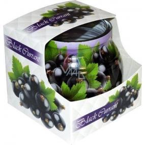 Admit Black Currant - Čierne ríbezle dekoratívne aromatická sviečka v skle 80 g