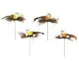 Ptáček s hniezdom zápich 14 cm + špajle 1 kus