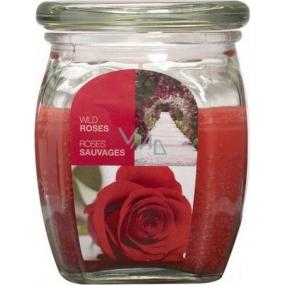 Bolsius Aromatic Wild Rose - Divoká Ruža vonná sviečka v skle 92 x 120 mm 830 g, doba horenia 100 hodín