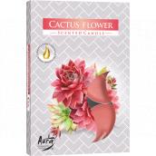 BISPOL Aura Cactus Flower - Kvet kaktusu vonné čajové sviečky 6 kusov